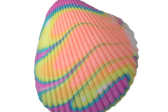 Clam Shell - 47103