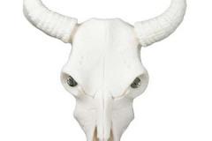 Steer Skull - 50093